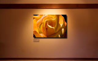 An orange rose painting - Rio Samba - by Steve Luce