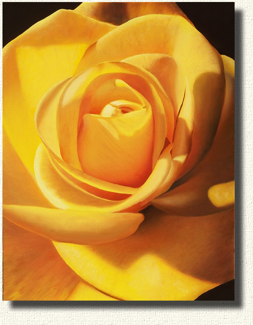 Midas Touch - A bright yellow rose painting of a first bloom